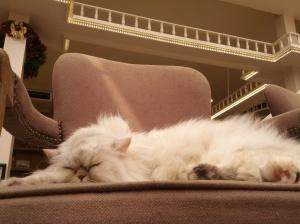 Comfy. So very comfy. Hmmmm. #jealous