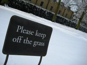 Grass? What grass?