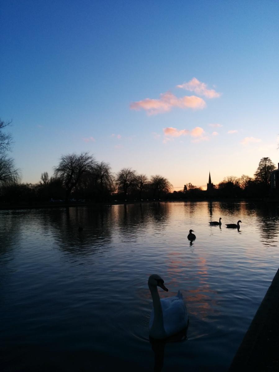 The Swan in Stratford